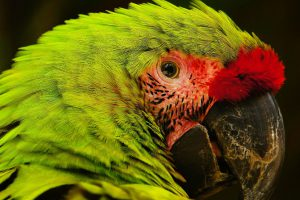 Honduras (Macaw Mountains) @Romain Buisson